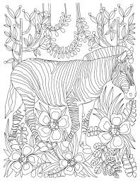 zebra coloring color pages stress coloring