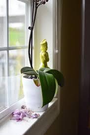 274 best indoor plants images on pinterest plants indoor