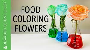 food coloring flowers youtube