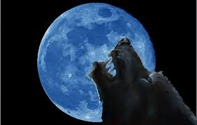 wolf looking at a blue moon by shekaar on deviantart