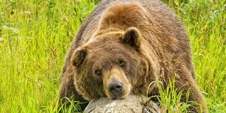 Alaska wildlife tours images Wildlife viewing visit anchorage jpg