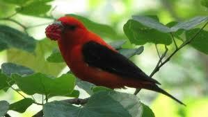 Ontario Backyard Birds How To Attract Bug Eating Birds To Your Garden Mnn Mother