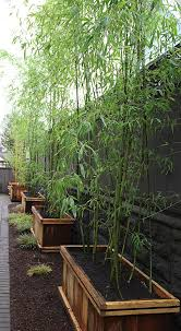 Privacy Garden Ideas Need Privacy Diy Garden Privacy Ideas Garden Privacy Plants