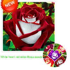 white roses for sale popular white roses garden buy cheap white roses garden lots from