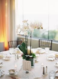 orchid centerpiece potted orchids reception centerpiece centerpieces photography
