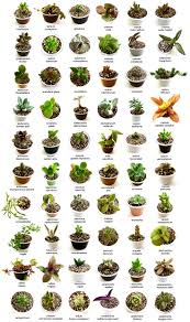 best 25 identifying succulents ideas on pinterest cactus