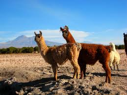 trekking holiday in chile ke adventure travel