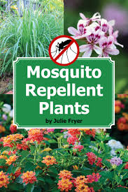 Best Plant For Mosquito Repellent Repel Mosquitoes Naturally With These Beautiful Plants Gardening
