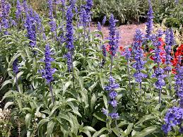 is it time to prune your arizona landscaping plants desert
