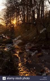 early morning sun breaks through the trees and lights up afon