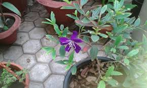 identification which is this plant with purple flowers and