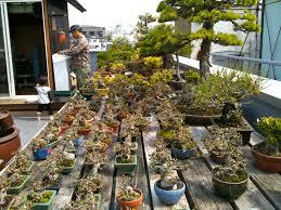 bonsai backyard garden champsbahrain com