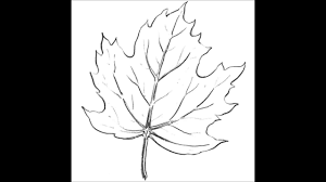 how to draw a maple leaf youtube
