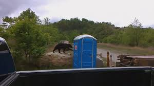watch bear hangs surface port potty