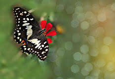abstract butterfly stock photos royalty free pictures