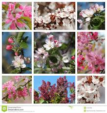 spring season nature collage with flowers royalty free stock