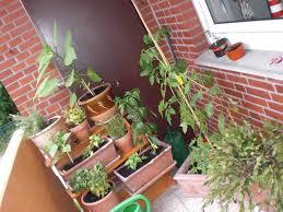 gem se pflanzen balkon balkongemüse und pflanzen nadines