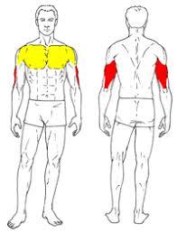 decline bench press muscles close grip bench press gymjp com