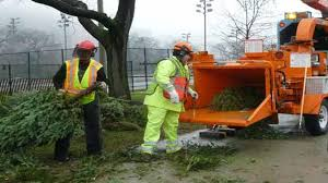christmas tree recycling locations in chicago nbc chicago