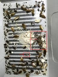 cafards cuisine 2017 nouveau eco m bug contrôle de cafard capture trappeur