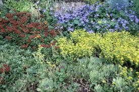 plants for rock gardens garden design garden design with small rock garden design ideas