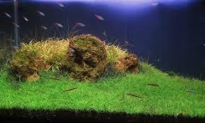 Best Substrate For Aquascaping 3 Best Carpet Plants For Aquascape Aquascaper