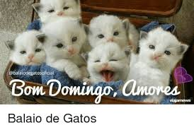 Gato Meme - balaiodegatosoficial bom domingo amores balaio de gatos meme on