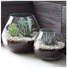 Clear Glass Vases With Lids Amazon Com Modern Clear Glass Succulent Plant Vase Small Candle