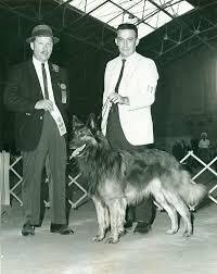belgian sheepdog origin belgian tervuren history u0026 training temperament