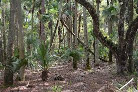 florida hikes get outdoors in florida your guide to florida u0027s