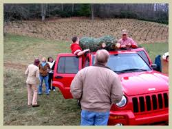 north carolina choose and cut christmas tree packages