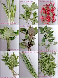 herb basic vietnamese herbs in my kitchen u0026 chilli uyen luu