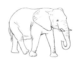 coloring pages elephant and piggie piggie and elephant coloring pages elephant coloring es free