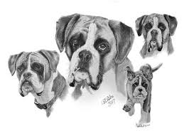 dog pencil portraits garry u0027s pencil drawings of dogs