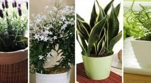 plantes dépolluantes chambre à coucher 10 plantes que vous devriez avoir dans votre chambre pour un