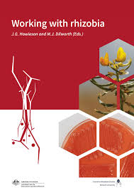 authentication of rhizobia and assessment of the legume symbiosis
