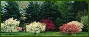 trees and shrubs bayside garden center