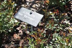plaque ardoise jardin l u0027étiquetage du jardin plaisir jardin com