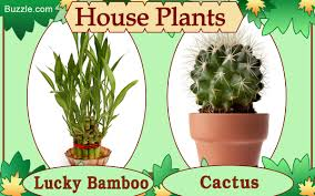 best house plants that make for an inviting ambiance