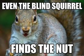 Squirrel Nuts Meme - blind squirrel finds a nut meme squirrel best of the funny meme