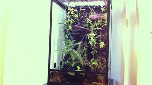green tree frog terrarium paludarium setup
