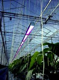 Greenhouse Lights Project Objectives