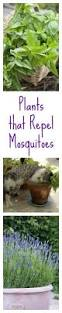 how to keep mosquitoes away from outside cats patio outdoor