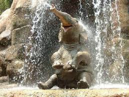 Elephant Meme - elephants know your meme