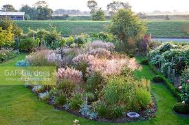 gap gardens overview of ornamental grass border in flowers