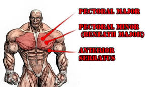 chest exercises peak loss and fitness