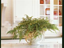 Plants That Need Low Light by Five Great Indoor Ferns Southern Living
