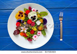 Salad With Edible Flowers - edible flowers stock images royalty free images u0026 vectors