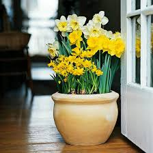 plant bulbs in pots now for spring beauty sand and sisal