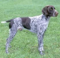 belgian sheepdog on petfinder dog breeds browse 151 dog breeds petfinder
